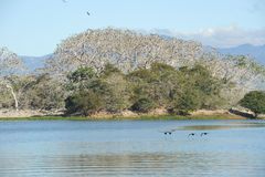 Bird island on the lake of Suchitlan near Suchitoto Royalty Free Stock Photos