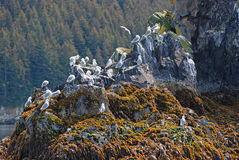 Bird Island near Kodiak Island. This island is found near Kodiak Island in Alaska Stock Photography