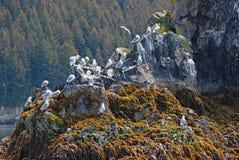 Bird Island near Kodiak Island Stock Photography