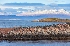 Free Bird Island Near Ushuaia Royalty Free Stock Image - 78036836