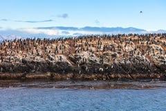 Bird Island near Ushuaia Royalty Free Stock Photos