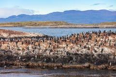 Bird Island near Ushuaia Stock Photography