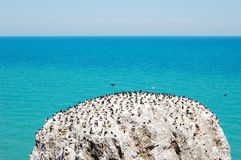 Bird island in Qinghai lake Royalty Free Stock Photography