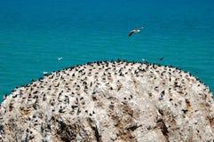 Bird island in Qinghai lake Stock Photo
