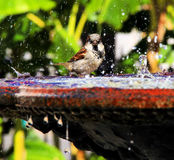 Bird in Jackson Square Fountain. In New Orleans Royalty Free Stock Images