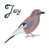 Bird jay vector illustration Stock Photo