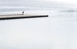 Bird on jetty Stock Images