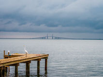 Bird on Jetty with Bridge in the Distance. A bird rests on a Jetty in the late afternoon, a large bridge is visible in the distance Royalty Free Stock Photos