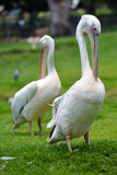 Bird at the Joburg Zoo Stock Photography