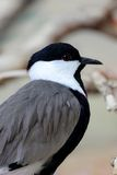 Bird Kingfisher Royalty Free Stock Images