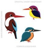Bird Kingfisher Set Cartoon Vector Illustration Royalty Free Stock Photos