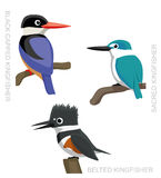Bird Kingfisher Set Cartoon Vector Illustration 2 Stock Photos