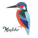 Bird kingfisher vector illustration Royalty Free Stock Photos