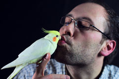 Bird kiss a man. Friends and love concept Royalty Free Stock Photos