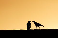 Bird Kissing Royalty Free Stock Photos