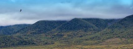 Bird kite hawk above mountain Stock Image