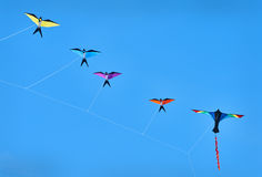 Bird Kites Blue Sky Royalty Free Stock Photo