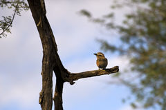 Bird at Kruger national park, Stock Photos