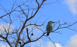 Bird in Kruger National Park Royalty Free Stock Image