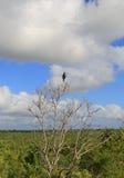 Bird in Kruger National Park Stock Photo