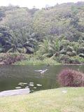 Bird on the lake stock image