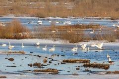 Bird lake Stock Photos