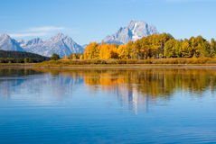 Bird on the lake in Grand Tetons National Park Stock Images