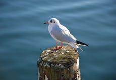 Bird on Lake Iseo, Italy Stock Image