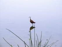 Bird on lake Stock Photo
