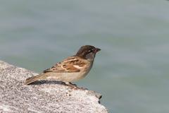 Bird on lake Royalty Free Stock Image