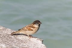 Bird on lake Royalty Free Stock Photos