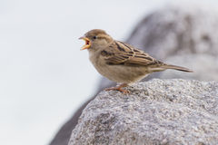 Bird at lake. A bird on the rock Stock Image