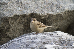 Bird at lake. A bird on the rock Stock Photo
