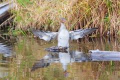 Bird, Lake Tahoe Royalty Free Stock Photo