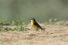 Bird on land Stock Photos