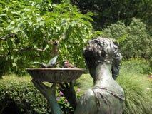 Bird Land In Bath. Two birds enjoying a bath Stock Image