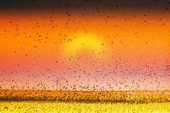 Bird Land Sunset Fine Art Photography Print royalty free stock photography