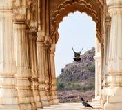 Bird landing, Jodhpur, Rajasthan, India. Couple of pigeons flying through the Jodhpur Palace colonnades Royalty Free Stock Image
