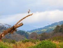 Bird landscape Stock Photos