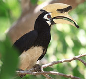 Bird with a large beak Stock Photography