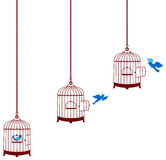 Bird leaving cage and return in the cage. This is a beautiful wall decal of tree, bird house & bird which is leaving the cage and then returning back Royalty Free Stock Photos