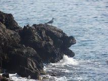 Bird on ledge royalty free stock photos
