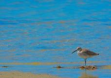 A Bird at the Lemon Bay Aquatic Reserve in Cedar Point Environmental Park, Sarasota County Florida Stock Photography