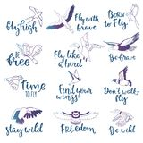 Bird lettering vector text fly high and flying birdie swallow with feather wings illustration set of owl freedom print. For typography with handwritten letters Royalty Free Stock Photos