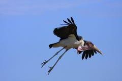 Bird Life Stock Photo