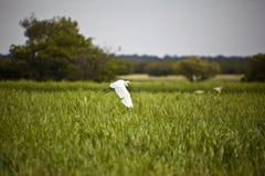 Bird Life At Kakadu National Park Stock Photography