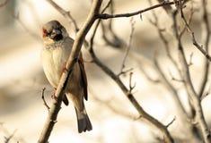 Bird on a Limb. A small bird sitting on a tree limb stock photo