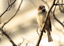 Bird on a Limb. A small bird sitting on a tree limb stock images
