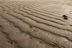 Bird line on sand royalty free stock photo