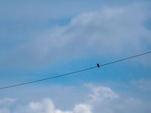 Bird. The little birds perched on power lines do not look at the world alone, but my friend's clashes came to pass that, in the wider world Stock Photography